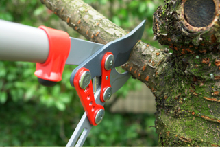 Tree Pruning in Waterbury, Naugatuck and surrounding CT towns